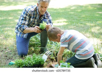 Father teaching son how to plant in vegetable garden