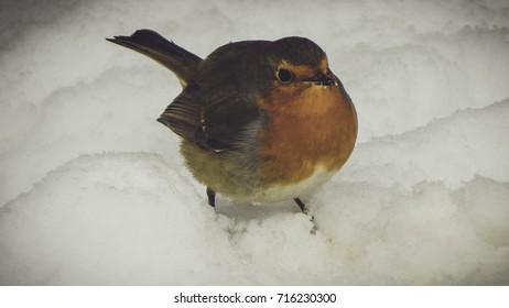 Fatty Titmouse on snow background