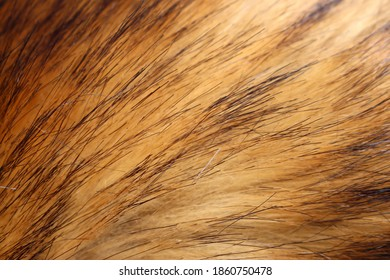 Faux brown fox fur with pile. Close-up, background