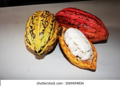 fave de cacao avec fruit de cacao coupé en deux montrant les graines