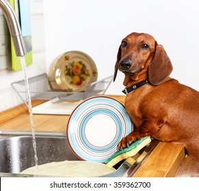 Favorite household duties of young dog