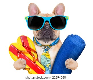 fawn bulldog with flip flops and towel , wearing a tie and sunglasses, isolated on white background
