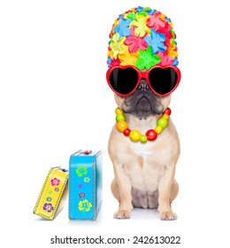 fawn french bulldog dog ready for summer vacation or holidays, besides luggage, isolated on white background
