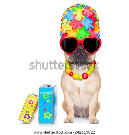 874470c6dc9302 Fawn French Bulldog Dog Ready Summer Stock Photo (Edit Now ...
