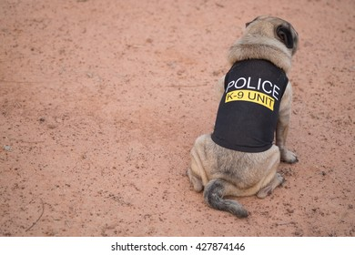 Fawn pug dog wearing Police K-9 Unit costume on ground.