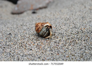 Fearful hermit crab in the sand, Costa Rica