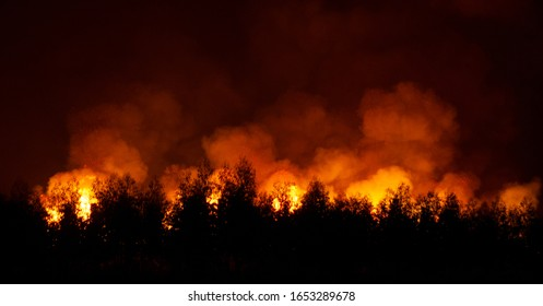 Fearsome forest fire is approaching at night.