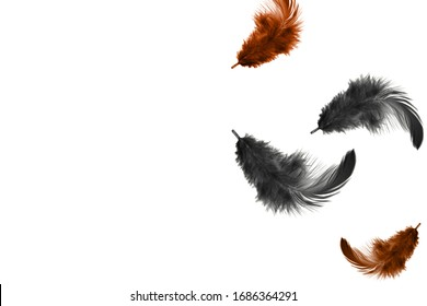 feather abstract background, soft black and gray feathers floating in the air, isolated on white background with copy space.