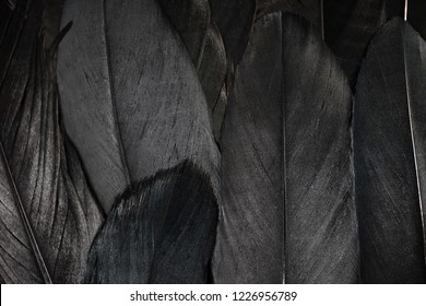 Feather background. Black feathers textured background.