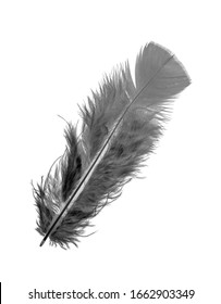 Feather of a bird on a white background, bright colored feathers.