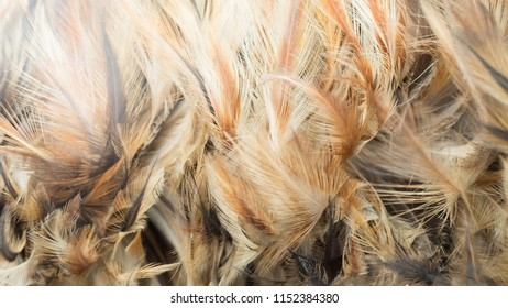 feather close up  background or texture