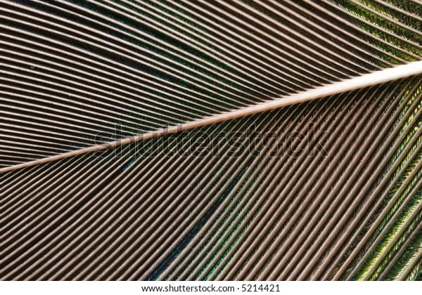 feather closeup