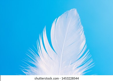 Feather close-up macro on blue background. Selective focus, blurred focus, abstraction.
