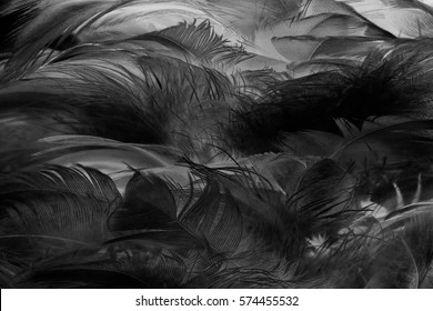 feather dark black with light abstract background