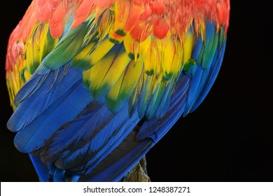 Camelot Macaw  Hyacinth Macaw Images, Stock Photos & Vectors