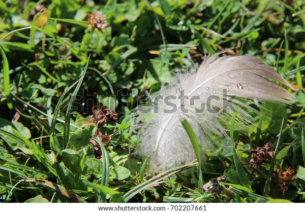 feather with drop of water