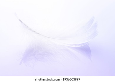 Feather falling. Nature abstract bird feather texture closeup on white background in macro photography. Glamorous sophisticated airy artistic image on soft blurred background