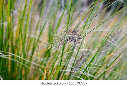 Feather hidden in colorful grass
