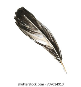 Feather isolated illustration
