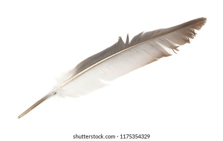 feather isolated on white background, top view