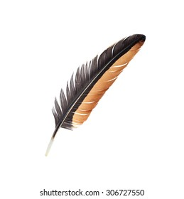 Feather isolated on white background.