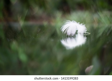 a feather in a mirrow in nature