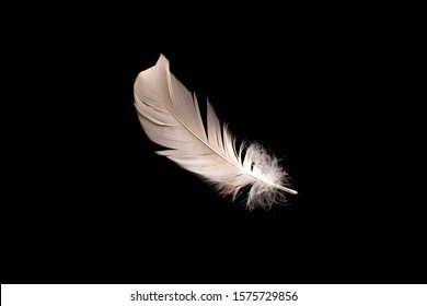 feather on dark background. Conceptual art photography.