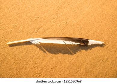 feather on a sand beach