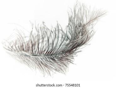 feather on white