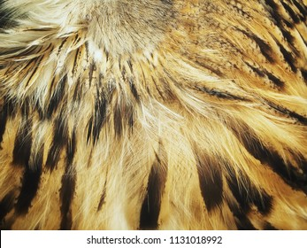 Feather owl background or texture