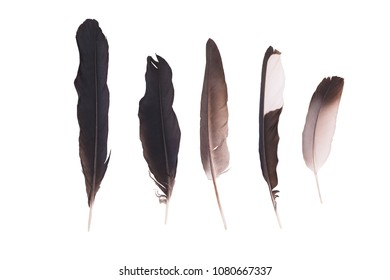 Feather of a raven and a pigeon isolated on white background. Black feather. White dove feather