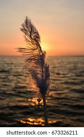 Feather and sea