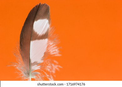 Feather texture and orange background