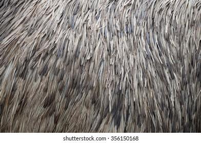 Feather Texture, ostrich