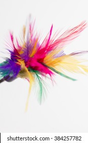 Feathered toy for cats isolated on white background