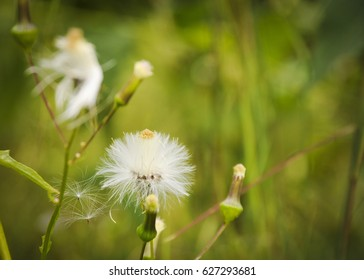 Feathered White Flower shows the beauty of nature in textures and colors. Commercial use.