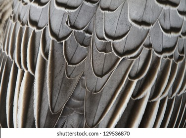 feathers - abstract background