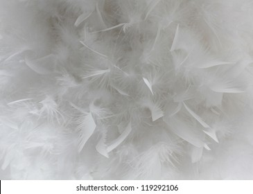 Feathers background, Bird white feathers close-up