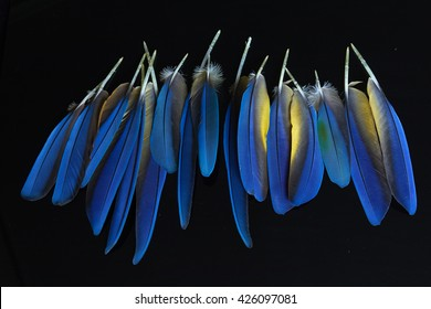 Feathers. Beauty of nature.