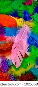 Feathers of birds changed in many colors