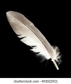 feathers isolated on black background