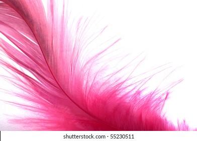 Feathers, isolated on white background