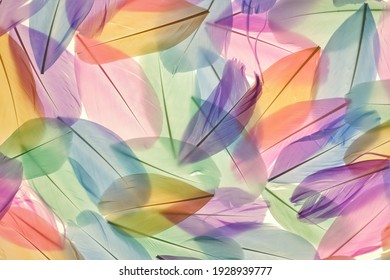 Feathers multicolored background in pastel colors. Feathers set pattern. Natural pastel feathers set in muted colors.Beautiful  feathers surface. Feather wallpaper.nature materials background