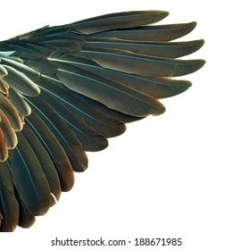 feathers on the wings of a wild duck