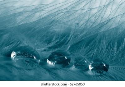 feathers with rain drops macro