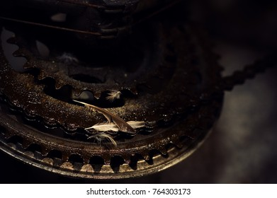 Feathers resting on greasy bicycle gear chain