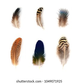 Feathers set isolated on white background
