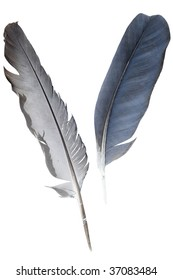 feathers under the white background
