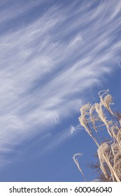 feathery clouds against a deep blue sky with ornamental grass in one corner