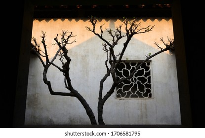 Feature tree in courtyard of a traditional Suzhou garden house complex.
